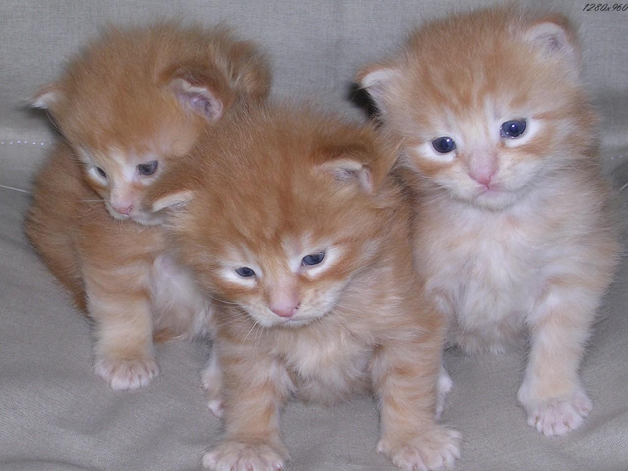 nouslbertin chat jeunes