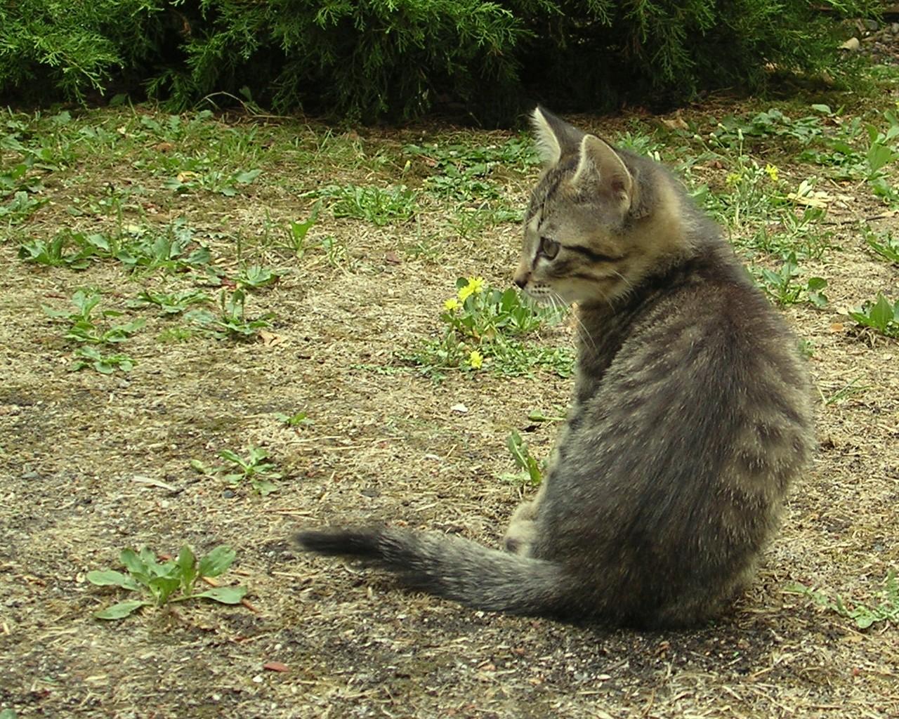 Photos de chatons Photo de chaton fond d ecran de chaton fonds d